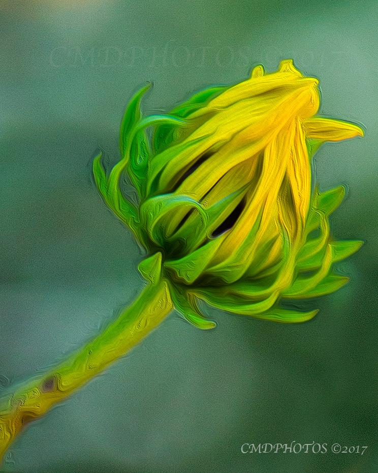 Flowerbud Painting