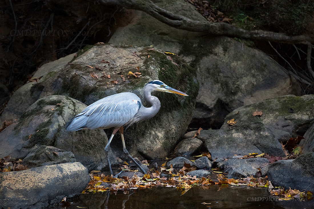 Heron Against the Eno Geography