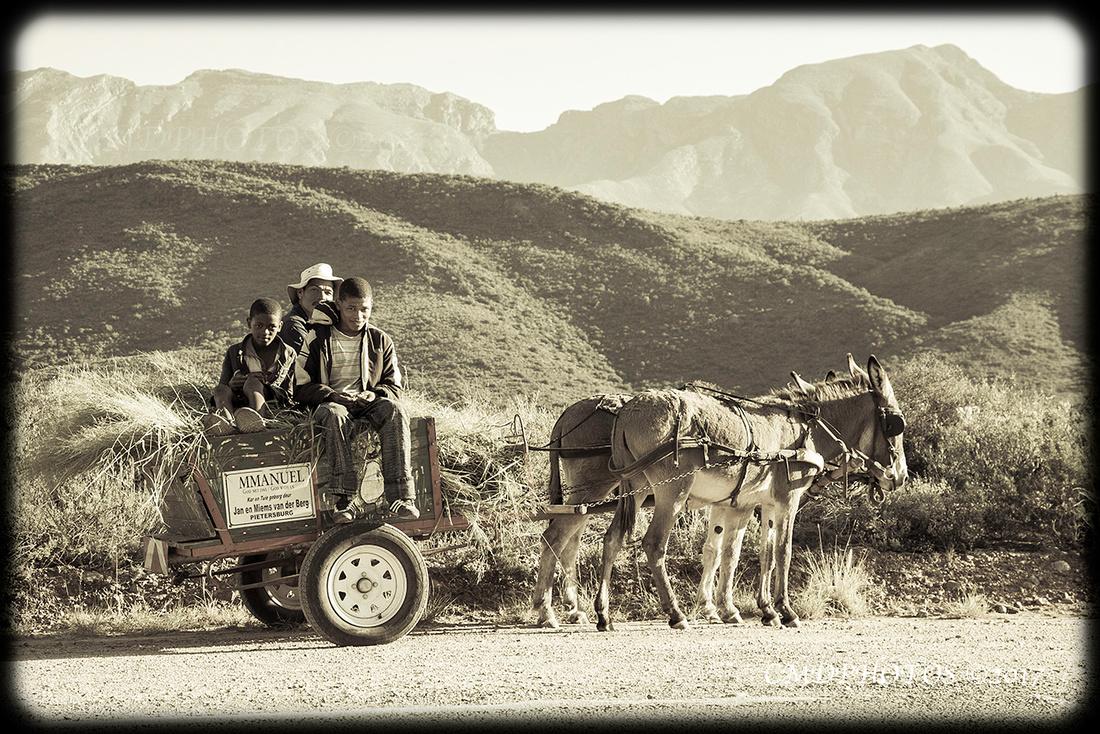 African Hay Transport