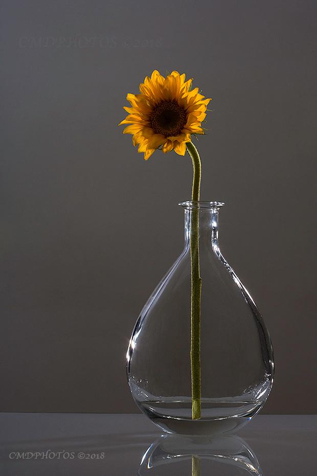 Sun Flower Design