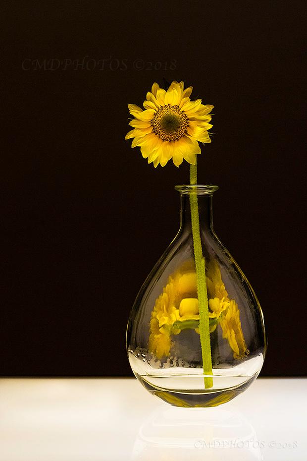 Sun Flower Dark Design