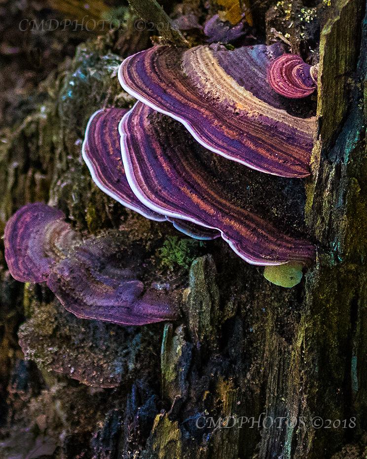Fun Fungus