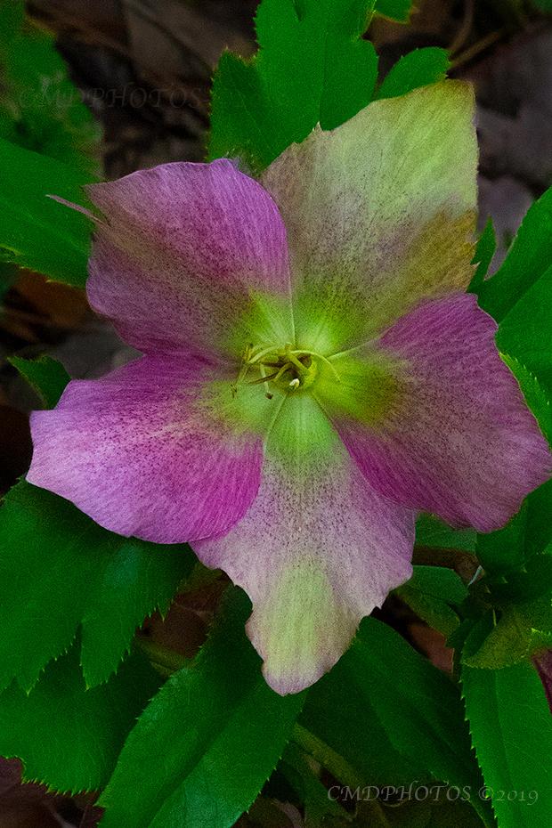Under Flower