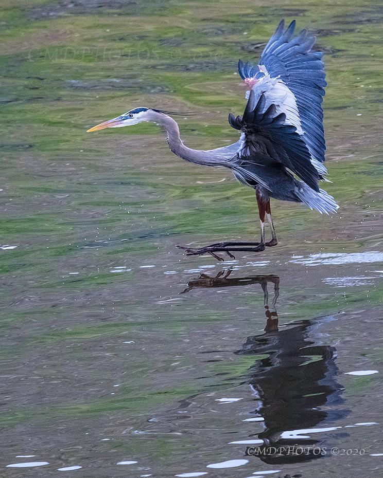 Heron Wheels Up