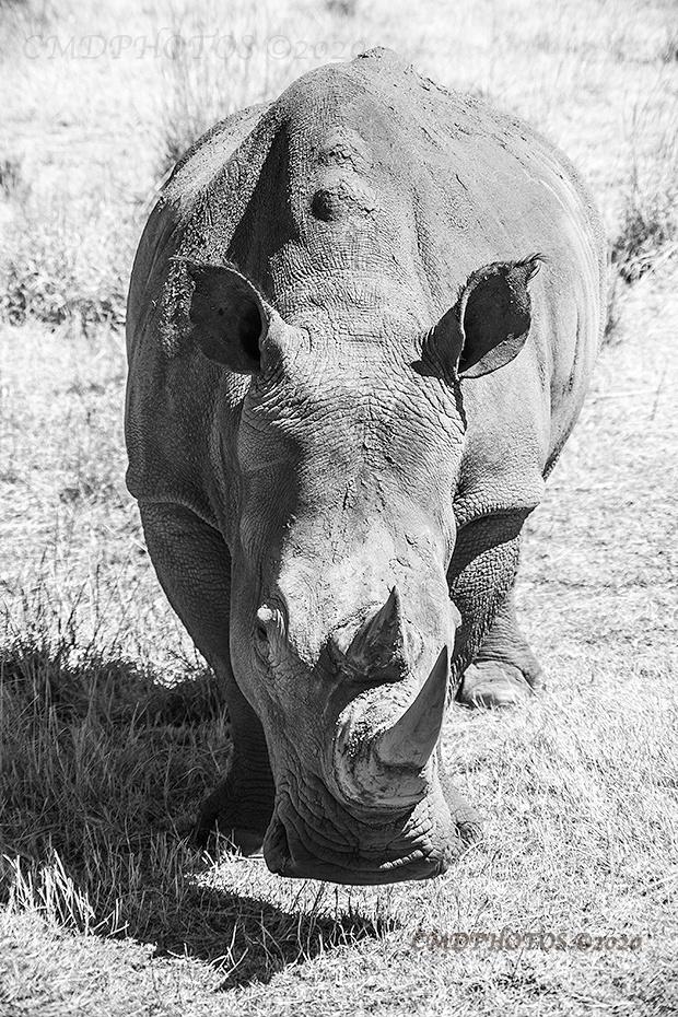 Rhino Friend